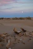 La luna sube en postre foto de archivo libre de regalías