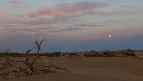 La luna sube en postre imágenes de archivo libres de regalías