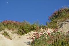 La LUNE au-dessus du bâti de floraison Image libre de droits