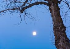 La lune… dans une nuit nuageuse images libres de droits