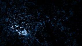 La lune rougeoie par des branches d'arbre clips vidéos