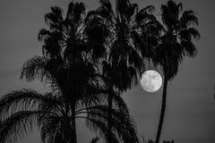 La lune se lève derrière des palmiers images stock