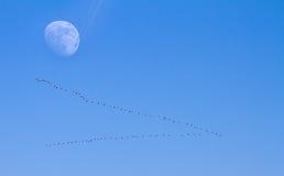 La lune volent près Image libre de droits
