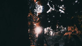 La luz de los rayos de Sun brilla a través de árboles y de ramas del toldo de bosque de la selva metrajes