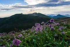 La luz de la mañana brilla sobre las flores fotografía de archivo libre de regalías