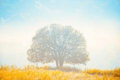 La luz de oro brilla abajo alrededor del árbol y del prado amarillo Fotos de archivo