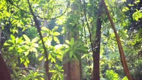 La luz de Sun brilla a través del toldo de la selva tropical 1920x1080 almacen de metraje de vídeo