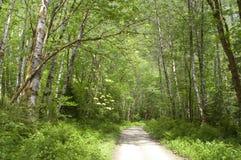 La luz del sol alcanza el bosque profundo de Forest Trail Fire Road Wilderness Imagenes de archivo