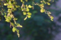 La luz del sol borrosa del árbol del verde de la naturaleza del fondo empañó la suavidad abstracta para la mañana natural gráfica Foto de archivo
