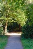La luz del sol brilla entre las hojas en el bosque Imagen de archivo