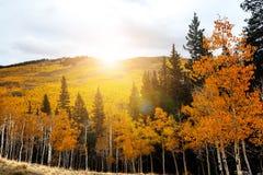 La luz del sol brilla intensamente detrás de árboles de oro del álamo temblón en Colorado Rocky Mount Imagen de archivo