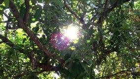 La luz del sol brilla a través de árboles metrajes