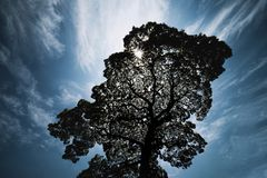 La luz del sol brilla a trav?s de los ?rboles grandes en la ciudad foto de archivo libre de regalías