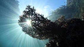 La luz del sol brillante siluetea el coral sano en Raja Ampat almacen de metraje de vídeo