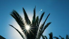 La luz del sol destella a través de ramas verdes y deja la palmera que agita en el viento almacen de video