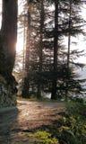 La luz del sol dirige la trayectoria en bosque imagenes de archivo