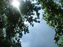 La luz del sol hace su manera a través de las hojas Fotos de archivo libres de regalías