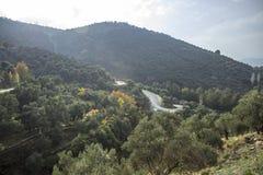 La luz del sol hermosa cae en los olivos en la colina cerca de la carretera de asfalto en el otoño fotos de archivo