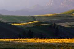 La luz del sol ilumina el campo de trigo Fotografía de archivo libre de regalías