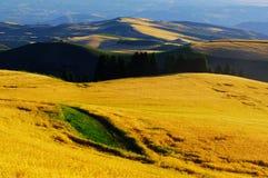 La luz del sol ilumina el campo de trigo Imagen de archivo