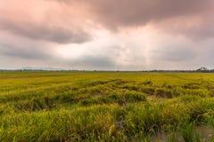 La luz del sol por la mañana brilla abajo a los campos del arroz Imagen de archivo libre de regalías