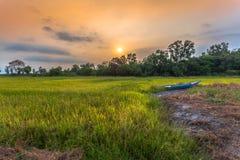 La luz del sol por la mañana brilla abajo a los campos del arroz Imagen de archivo