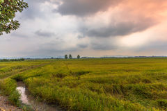 La luz del sol por la mañana brilla abajo a los campos del arroz Fotografía de archivo