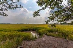 La luz del sol por la mañana brilla abajo a los campos del arroz Foto de archivo