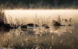La luz del sol que brillaba intensamente en helada cubrió rocas y la hierba en el borde del agua enfriado por en la noche de novi fotografía de archivo libre de regalías