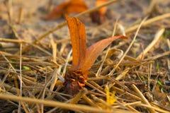 La luz del sol suave del foco brilla el arroz moreno de goma anaranjado Fotos de archivo libres de regalías