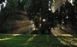 La luz en el bosque Foto de archivo libre de regalías