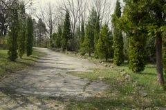 La luz hermosa de la mañana en parque público con el campo de hierba verde El parque verde con vistas a arbustos verdes Fotografía de archivo