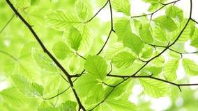 La luz verde sale del fondo natural almacen de video