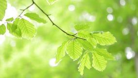 La luz verde sale del fondo natural