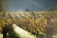 La máquina cosecha las uvas de vino foto de archivo