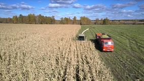 La máquina segador aérea del ensilaje recolecta el follaje del maíz para el forraje almacen de video