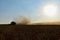 La máquina segador amarilla cosechó el grano Época del foco de la cosecha en grano El polvo vuela de la trilladora fotos de archivo