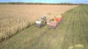 La máquina segador del ensilaje recolecta el follaje del maíz para el forraje verde almacen de video