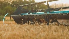 La máquina segador quita el campo del vídeo de la cámara lenta de la agricultura del pan del trigo cosecha de la hierba del grano almacen de metraje de vídeo