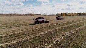 La m?quina segadora cort? el trigo maduro en campo de granja de la agricultura almacen de metraje de vídeo