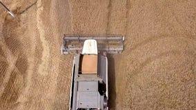 La máquina segadora de la visión aérea recolecta el trigo en la puesta del sol Cosecha del campo de grano, estación de la cosecha metrajes