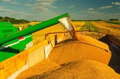 La máquina segadora descarga el grano del trigo fotografía de archivo