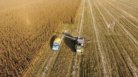 La máquina segadora vierte el grano del maíz en el cuerpo del camión La máquina segador cosecha maíz Fotos de archivo