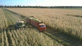 La máquina siega, taja y descarga plantas de maíz en transporte almacen de metraje de vídeo