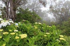 La más forrest de niebla en Kauai Foto de archivo libre de regalías