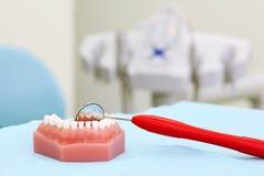 La mâchoire artificielle et le miroir dentaire sont sur la table images libres de droits