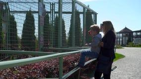 La mère avec le petit fils sont dans le zoo clips vidéos