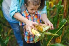 La mère avec son fils nettoient le maïs Image libre de droits