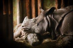 La mère de rhinocéros avec son bébé dans le zoo Plzeň Images stock