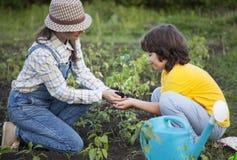 La mère donne à son soleil un germe dans le jardin d'été Images libres de droits